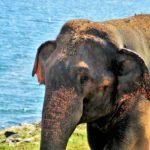 Sri Lanka intriguing destination to go